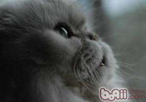 让人烦恼的猫式接吻-成猫饲养